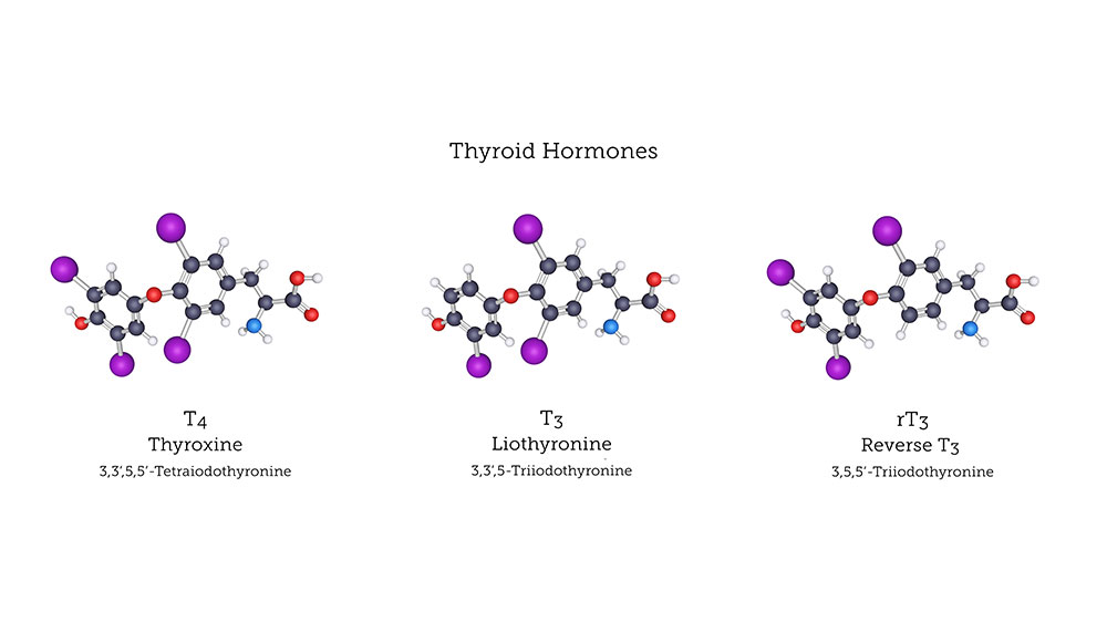 How Reverse T3 Affects Thyroid Under Conversion